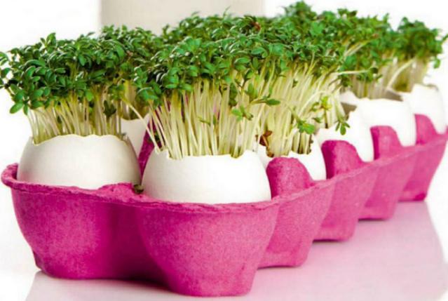 Yumurta Kartonlarını Değerlendirme