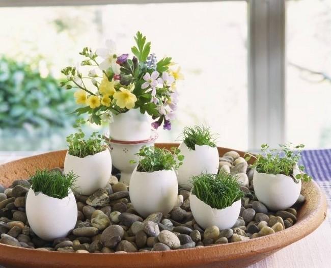 Yumurta Kabuklarından Bitki Yetiştirme Konsepti Yapımı