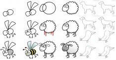 24 Adet Adım Adım Kolay Hayvan Çizimleri