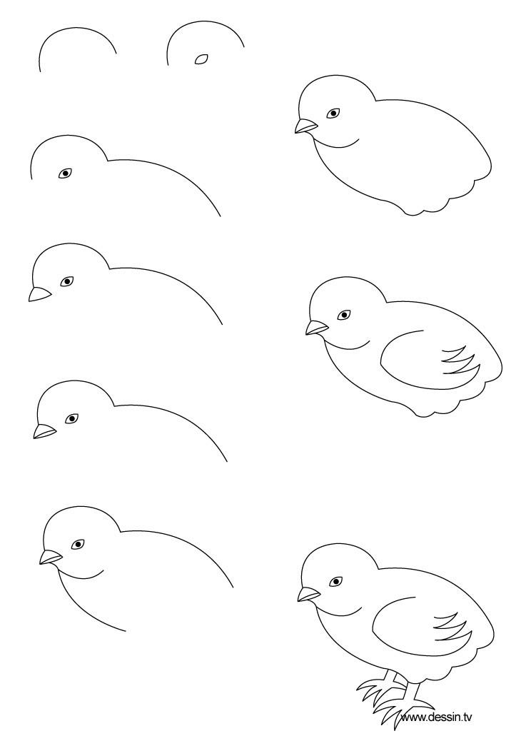 Kolay Kuş Çizimi