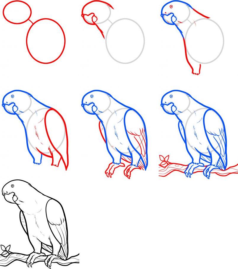 Papağan Resmi Çizimi