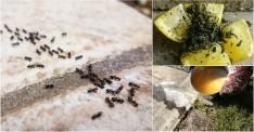 Karıncalara Zarar Vermeden Uzaklaştırmanın Doğal Yöntemleri