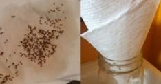 Bu Harika Yöntemle Yaz Ayını Sivrisineksiz Geçireceksiniz